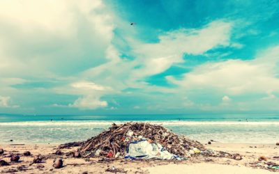 Pulau Semakau – the Environmental Friendly Island Made of Trash
